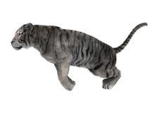 3D rendant le tigre blanc sur le blanc Photo libre de droits
