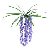 3D rendant les fleurs sauvages d'orchidée sur le blanc Photos libres de droits