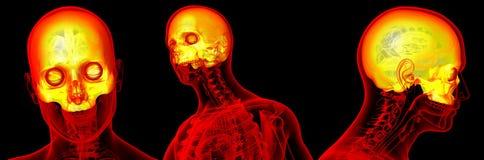 3d rendant médical du crâne supérieur Illustration Stock