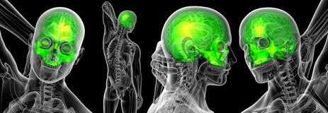 3d rendant médical du crâne supérieur Illustration Libre de Droits