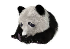 3D rendant Panda Bear Cub Photos stock