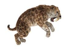 3D rendant Saber Tooth Tiger sur le blanc Illustration de Vecteur
