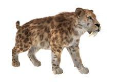 3D rendant Saber Tooth Tiger sur le blanc Illustration Libre de Droits
