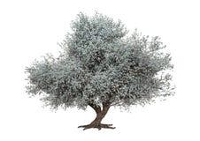 3D rendant Sakura Tree sur le blanc image libre de droits