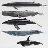 3D rendem da coleção das baleias ilustração stock
