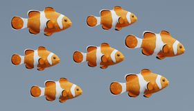 3d rendem de Clownfish Fotos de Stock