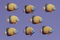 3D rendem de Ring Angel Fish azul ilustração do vetor