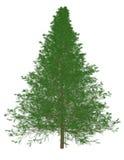 3d rendem de um pinheiro Fotos de Stock