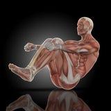 3D rendem de uma figura médica com mapa do músculo sentam dentro acima a pose ilustração stock