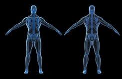 3d rendem do corpo humano e do esqueleto Fotografia de Stock Royalty Free