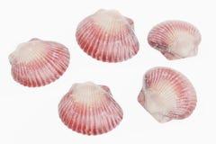 3D rendem dos moluscos ilustração do vetor
