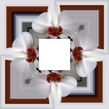 3D rendem o quadro do fundo da flor Foto de Stock Royalty Free