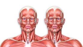 3d rendent d'un chiffre médical avec l'expression du visage montrant le franc Image libre de droits