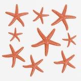 3D rendent des étoiles de mer illustration de vecteur