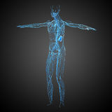 3d rendent l'illustration médicale du système lymphatique Photographie stock