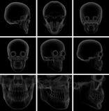 3d rendent le crâne Photographie stock