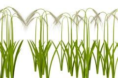 3d render of barley Royalty Free Stock Image
