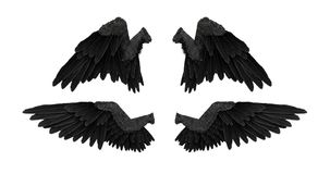 3D render black angel wings with on an white background. 4K Stock Photos