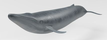 3D Render of Blue Whale. Realistic 3D Render of Blue Whale Royalty Free Stock Photos
