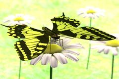 3d render of butterfly. Realistic 3d render of butterfly Stock Image