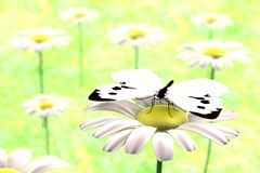 3d render of butterfly. Realistic 3d render of butterfly Stock Photography