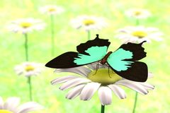 3d render of butterfly. Realistic 3d render of butterfly Royalty Free Stock Photos