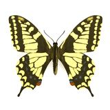 3d render of butterfly. Realistic 3d render of butterfly Royalty Free Stock Image