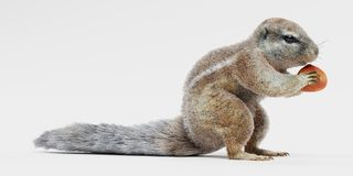 3D Render of Cape Squirrrel. Realistic 3D Render of Cape Squirrrel royalty free illustration