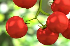 3d render of cherry tomatoes Royalty Free Stock Photography