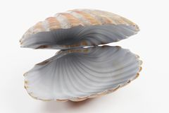 3D Render of Clam Stock Photo