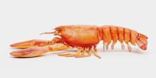 3D Render of Cooked Lobster stock illustration