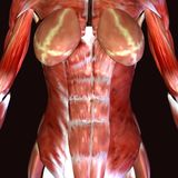3d render depicting the muscle structure of the human body Royalty Free Stock Photography