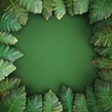 Tropical green leaves, alocasia,green background. 3d render, digital illustration, tropical green leaves, alocasia,green background Stock Images
