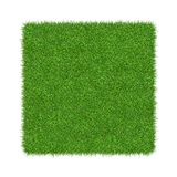 3D render of green grass. Natural texture background. Fresh spring green grass. Isolated on white background