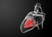 3d render Heart atrium Stock Photos