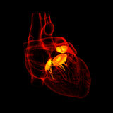3d render Heart valve Royalty Free Stock Photos