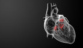 3d render Heart valve Stock Photos