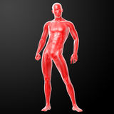 3d render human anatomy Stock Photos