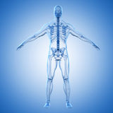 3d render of human body and skeleton Stock Images