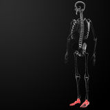 3d render human foot x-ray Royalty Free Stock Images
