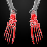 3d render human foot x-ray Royalty Free Stock Image