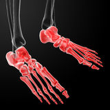 3d render human foot x-ray Royalty Free Stock Photography
