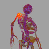 3d render human of shoulder pain Stock Photo