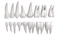 3d render of human teeth Stock Image