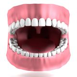 3d render of human teeth Stock Photography
