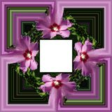 3D render flower background frame. 3D render illustration of  background frame with embossed real native colorful flowers Stock Photo