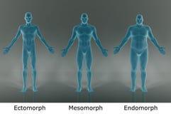 3D Render : illustration of male body type, film negative shader. Male body type illustration : ectomorph skinny, mesomorph muscular, endomorph heavy weight Stock Photos