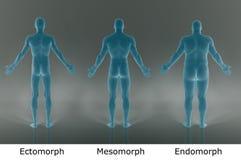 3D Render : illustration of male body type, film negative shader. Male body type illustration : ectomorph skinny, mesomorph muscular, endomorph heavy weight Stock Photography