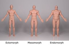 3D Render : illustration of male body type, front side. Male body type illustration : ectomorph skinny, mesomorph muscular, endomorph heavy weight, front View Stock Image