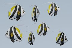 3d Render of Longfin Bannerfish. Realistic 3d Render of Longfin Bannerfish Stock Photography
